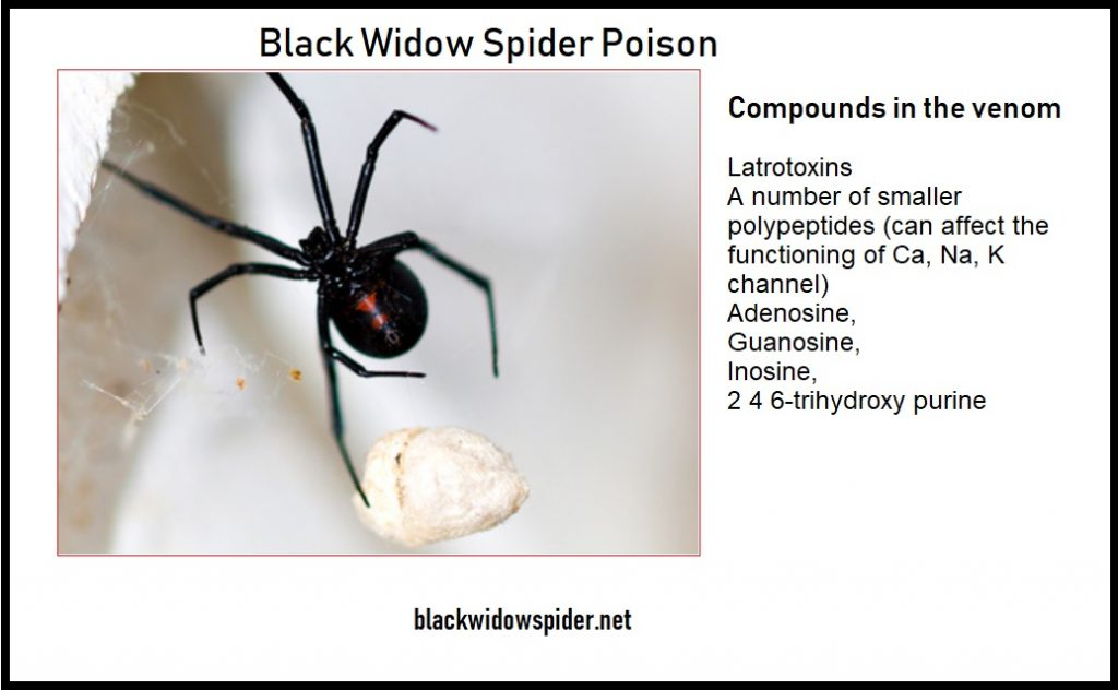 Black Widow Spider Poison